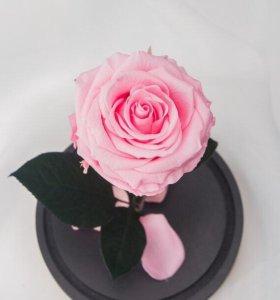 Роза в колбе ( ИДЕАЛЬНЫЙ ПОДАРОК)