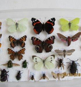 Коллекция насекомых,пособие для школы