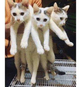 Котята 🐱
