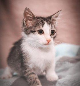 Котёнок в дар в добрые руки