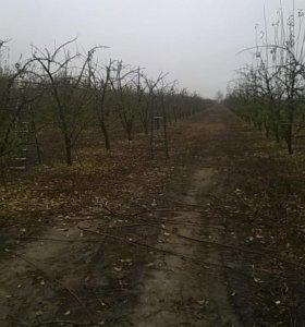 качественная обрезка плодовых деревьев