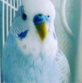 Попугай(умеет говорить некоторые слова)