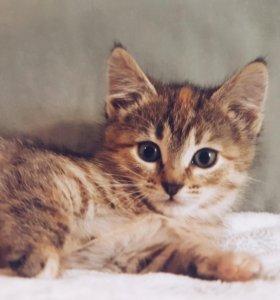 Ласковая девочка котенок
