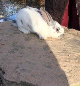 Мясо кролика, Кролики от 3 месяцев