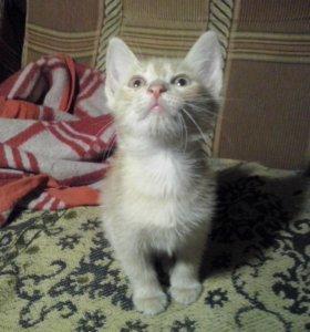 Котят в добрые руки (мальчики)