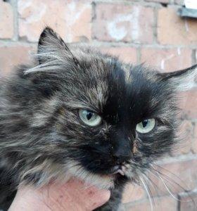 Кошка с желто-зелеными глазами