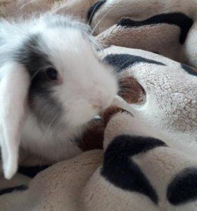 Продается кролик