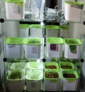 Аэросад, микрозелень, гидропоника