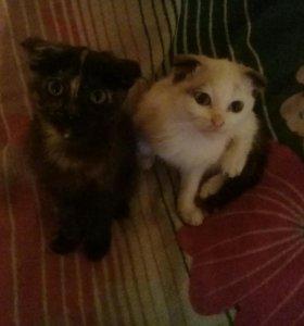 Котята-самки