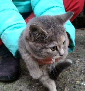 Продаем котенка