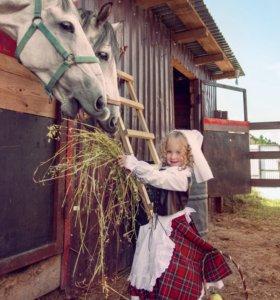 Прокат лошадок,аренда, верховая езда,конкур.