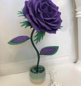 Роза-ночник