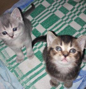 Котятки плюшки