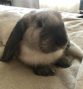 Вислоухий кролик клетка