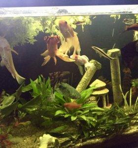 Аквариум, рыбки, тумба