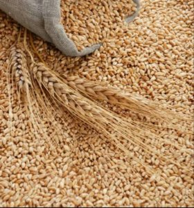 Зерно пшеница в мешках