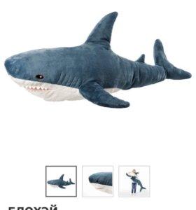 Акула блохэй