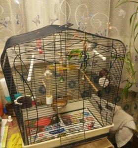 Волнистые попугайчики пол годика