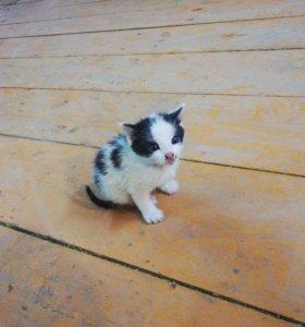 Отдадим в хорошие руки остался один котик мальчик
