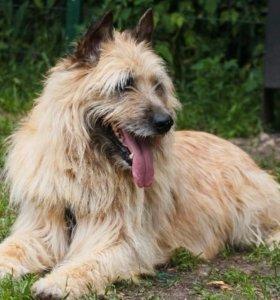Оптимист Цитрус, собака в добрые руки в дар