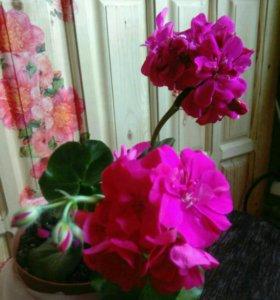 Где купить рассаду цветов в омске — 2