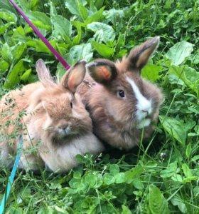 Домашние Кролики 😻