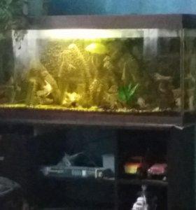 Аквариум с обарудованием .рыбками и тумбачкой