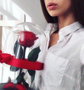 Роза в Колбе верная роза красная