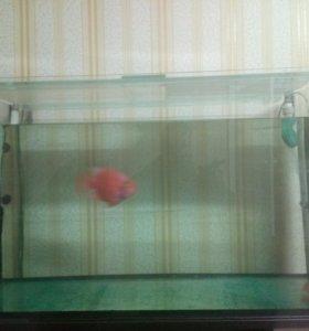 Продам аквариум 250л с тумбой и оборудованием