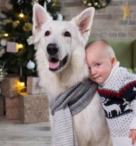 Собака для съемок и фотосессий