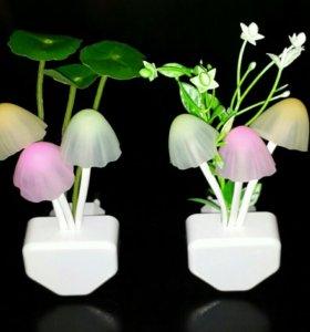 Ночник грибы