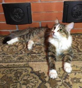 Кошечка с пушистым хвостом ищет дом