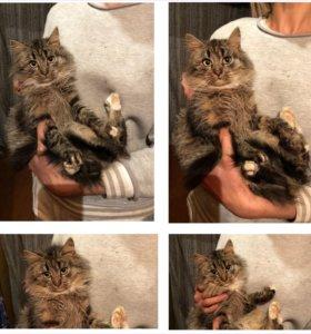 Пушинка - котенок из леса