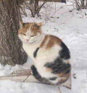 Кошечки и котик