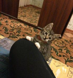 Отдам котёнка 💕🙏