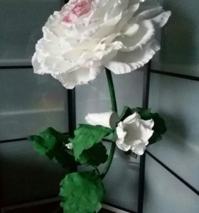 Роза интерьерная.