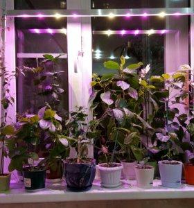 Фито лампа для растений и рассады 30 вт на стойках