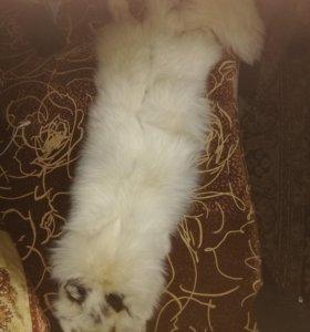 Шкура белой лисы