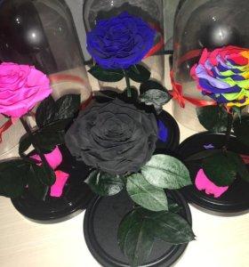 Роза в колбе 🌹