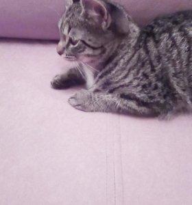 Котенок мальчик3месяца