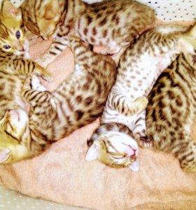 Выбирайте себе леопарда     Вы станете счастливее