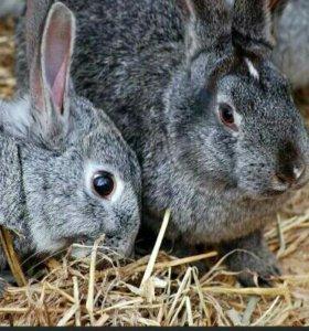 Кролики 8месяцев