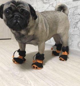 Шлейка для дрессировки собак