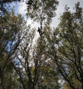 Спилка деревьев, расчистка участков