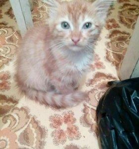 Котята 3месяца