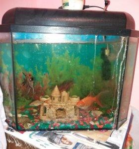 Аквариум и рыбки