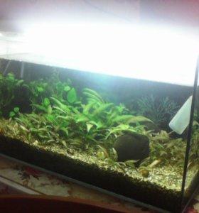 аквариум и все все все