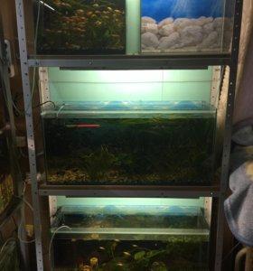 Распродажа аквариумного оборудования .