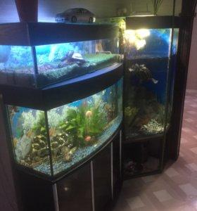 Продам аквариумный комплекс