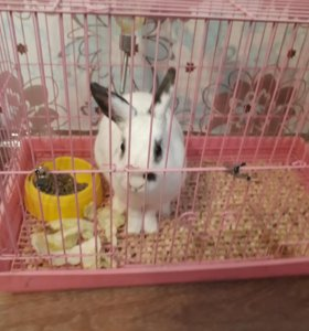 Кролик с клеткой и поилкой